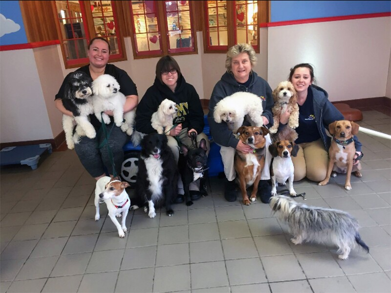 Katy kneeling down with her co-workers and 12 different dogs taking a group photo at Best Friends Pet Care.
